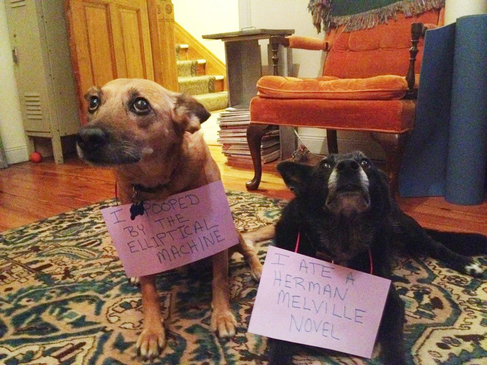 http://www.dogshaming.com/wp-content/uploads/2012/08/tumblr_m90e36alQ01re4ne0o1_1280.jpg
