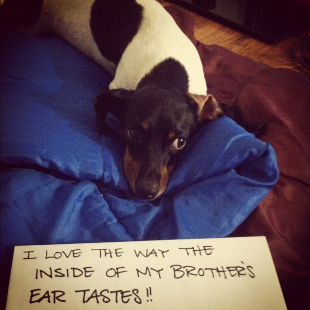 My Dog Wont Stop Licking Carpet: August 2012