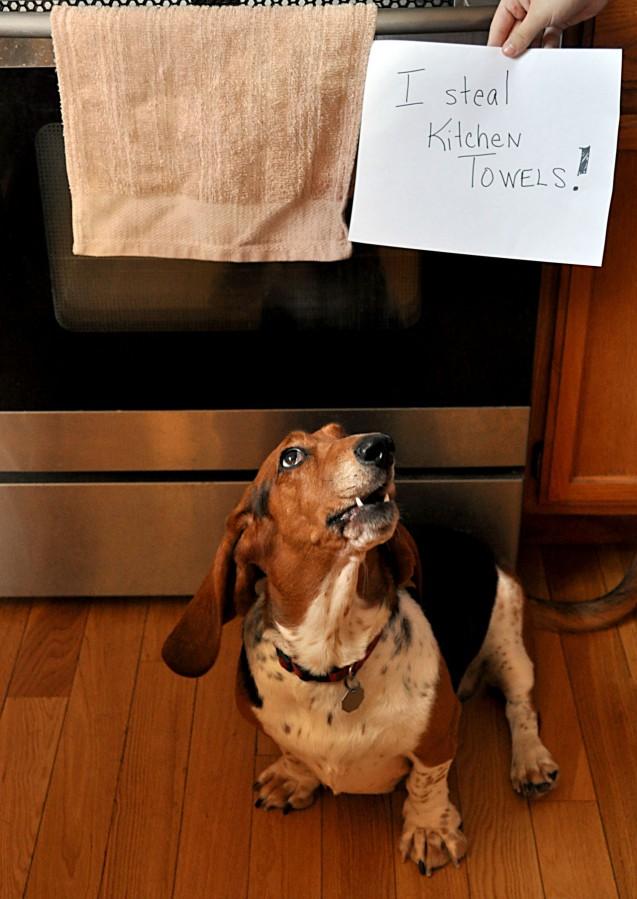 I Steal Kitchen Towels