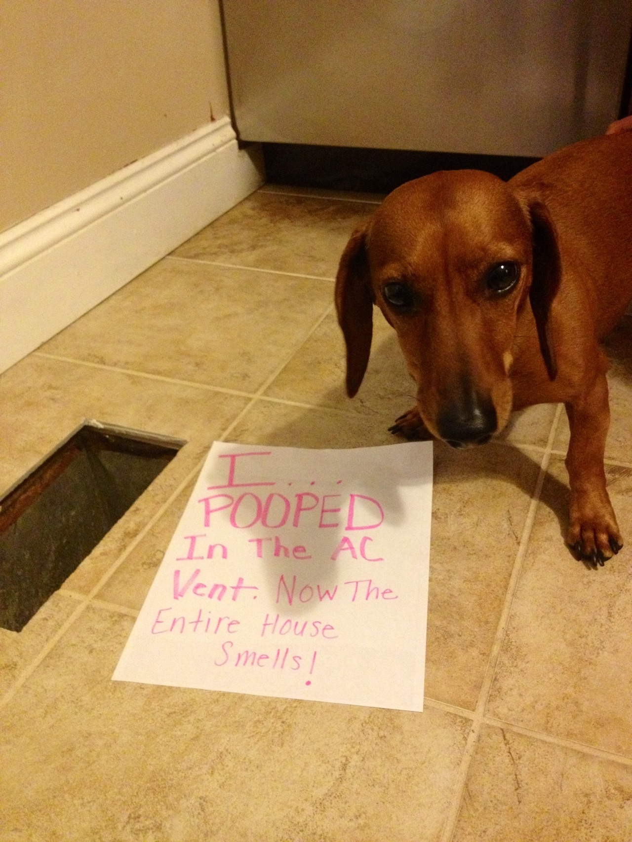 I Pooped In The A/C Vent And Now The Entire House Smells - Dogshaming | Dogs Pooping In The House