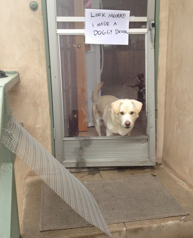 BeattyDogshaming