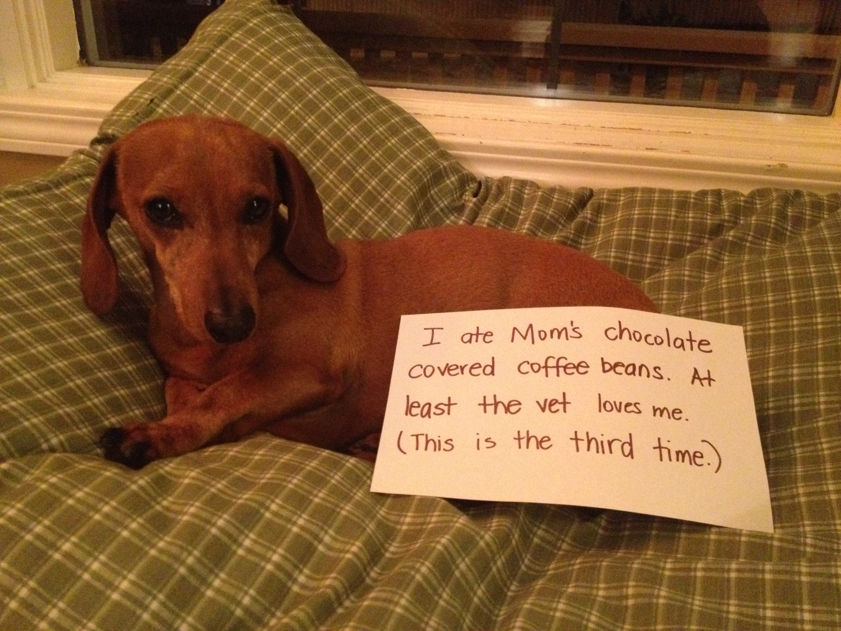 How Much Chocolate Cake Will Kill A Dog