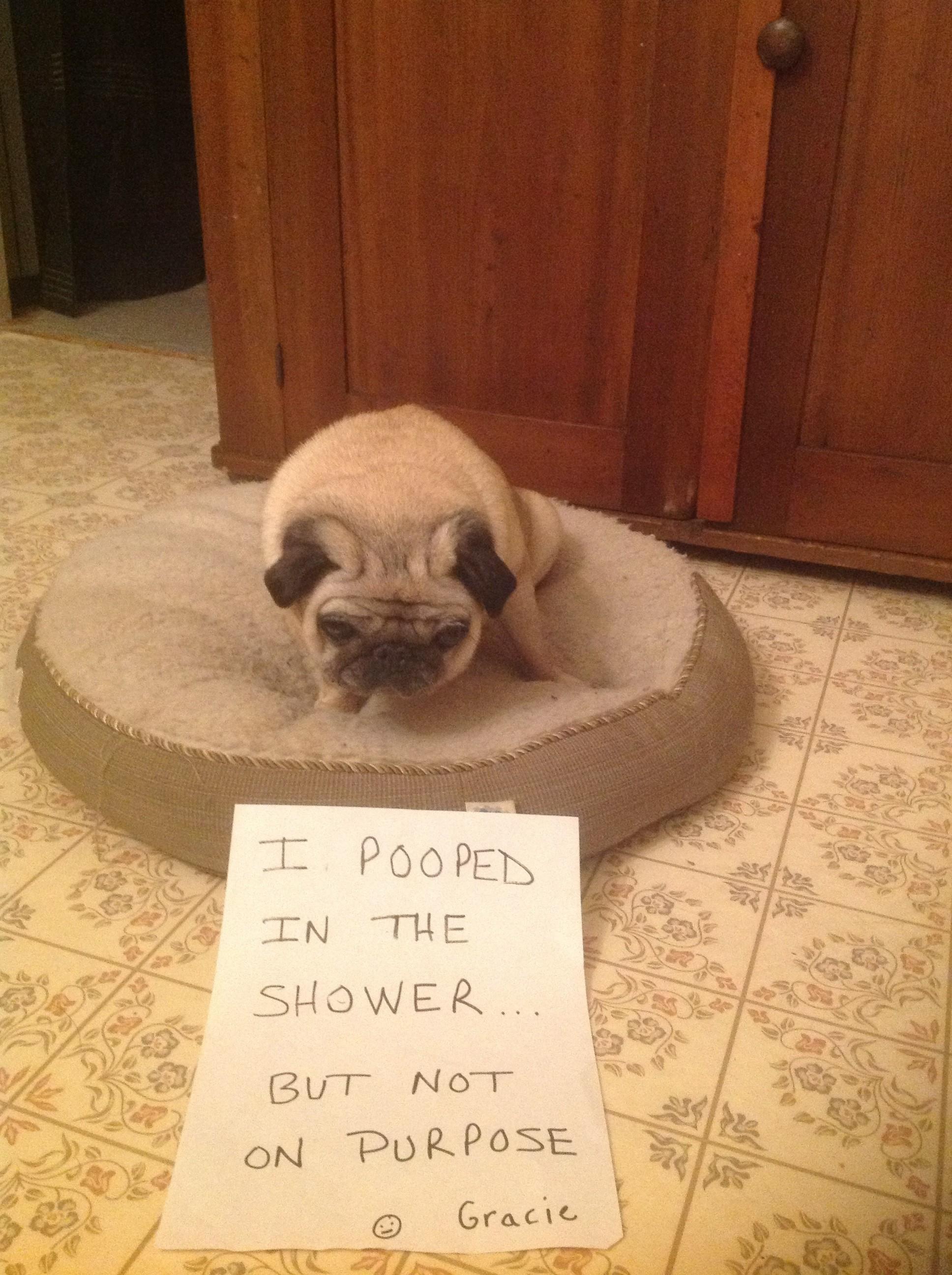 how to clean sisal rug dog poop