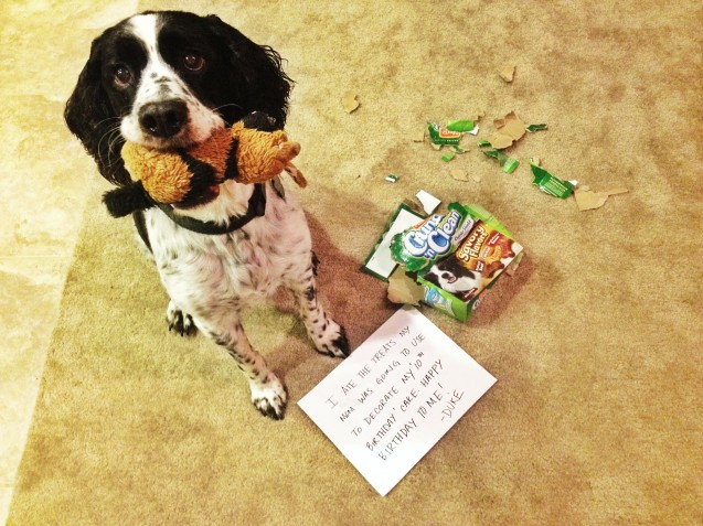 Happy 10th Birthday Duke Dogshaming