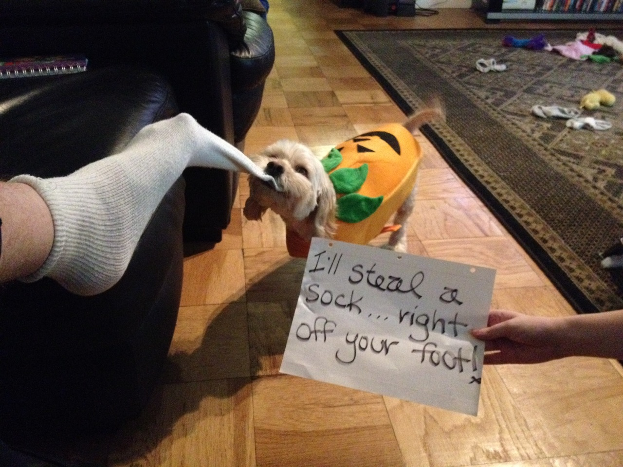 how to keep a sock on a dog foot