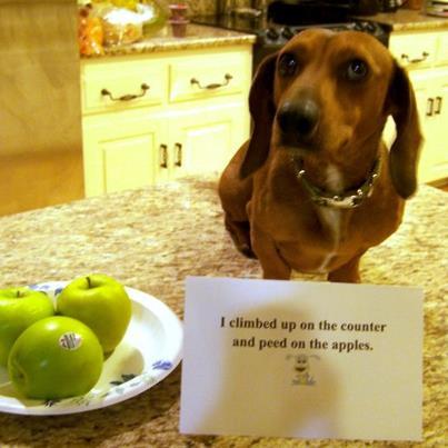 Bad-dog3