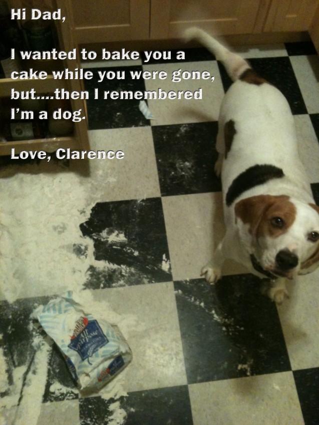 Clarence.DogShaming
