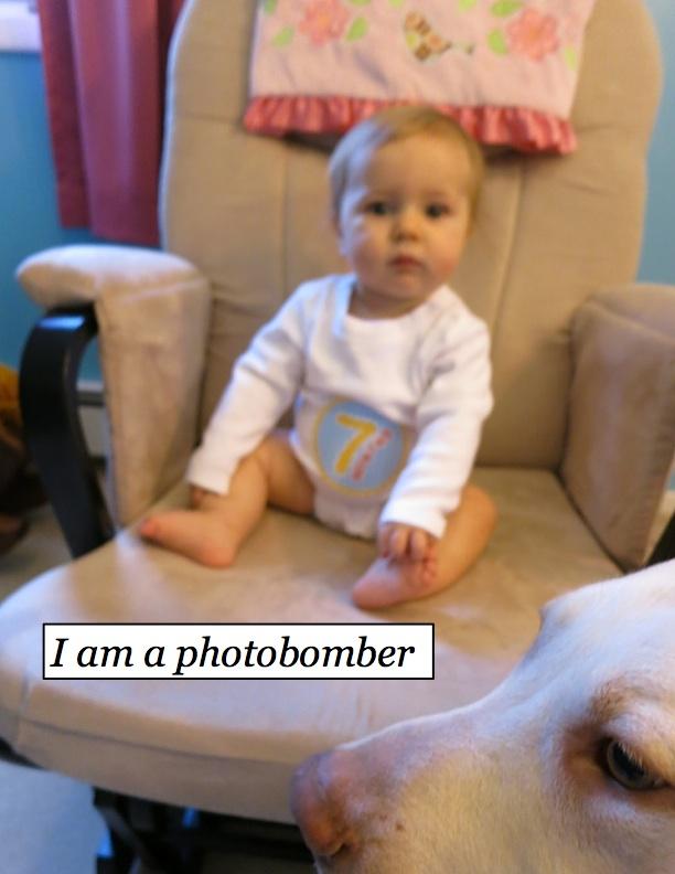 Hankphotobomb