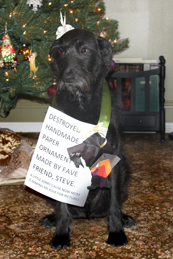 Henry_dog_shaming_01_small