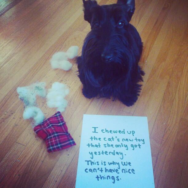 Chewed Up Dog Toy