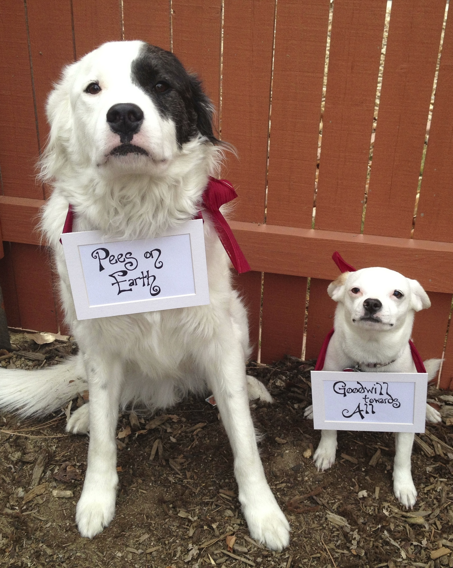 dog holiday dog shaming - Dog Christmas Card Ideas