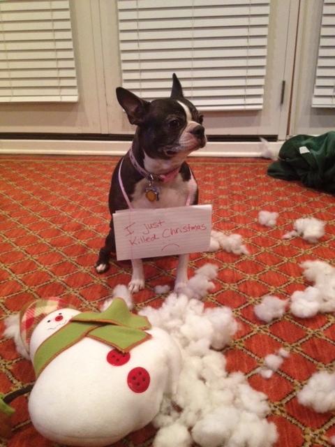 Lulu-ate-Frosty
