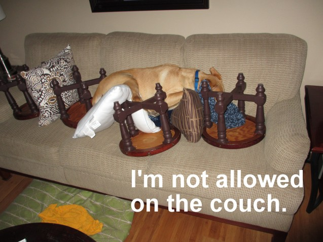 Riley-on-couch