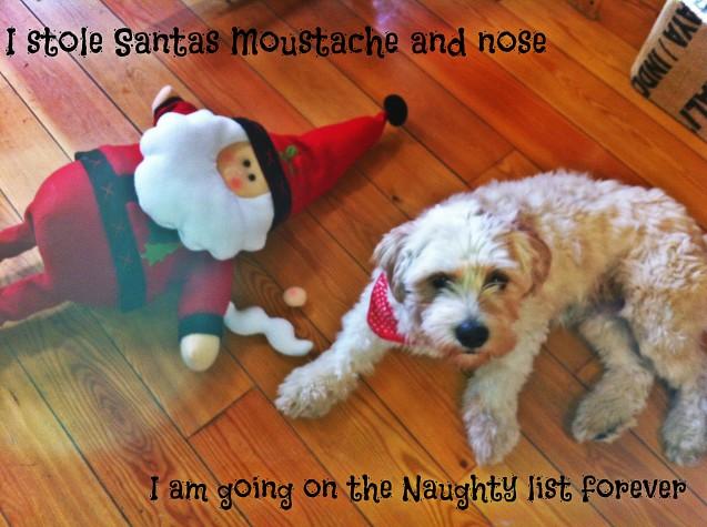 Rocky-Santa