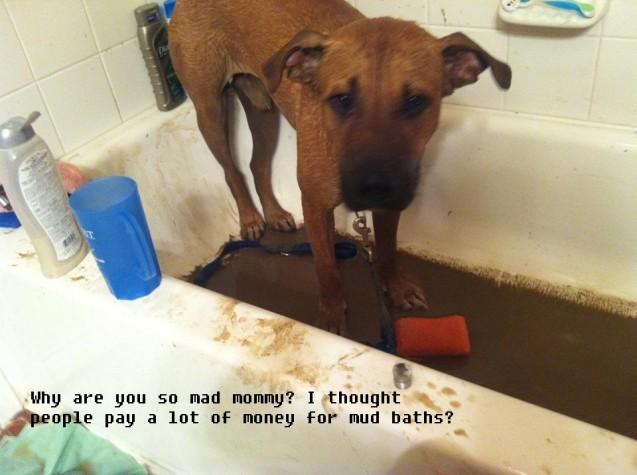 Roscoe-mud-bath