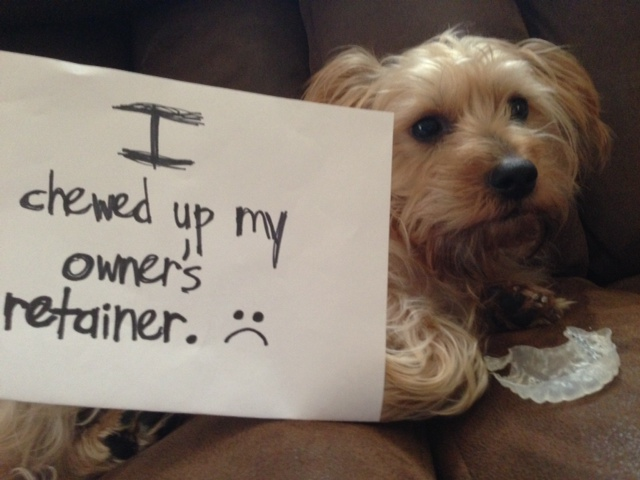 Pilfering Pooches Archives Page 100 Of 185 Dogshaming