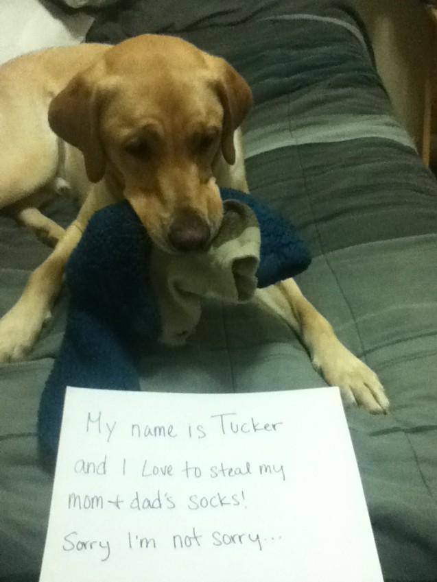 Tucker-2