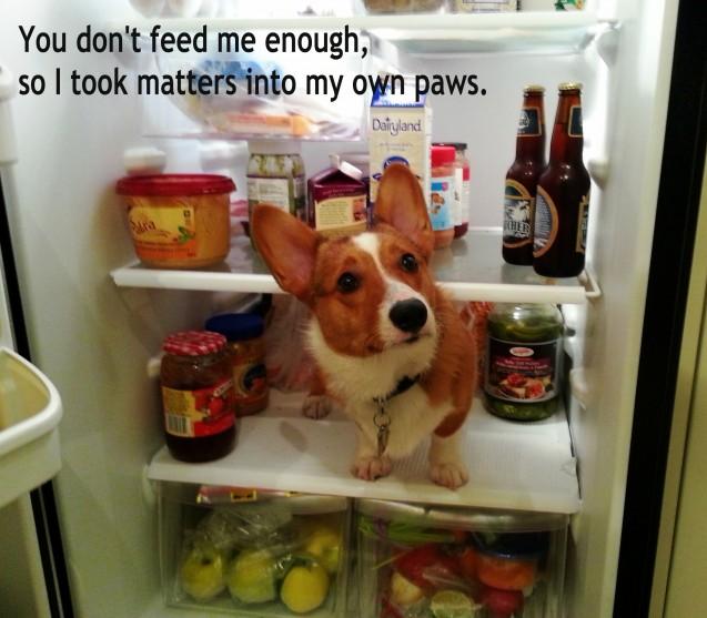 Watson-in-fridge