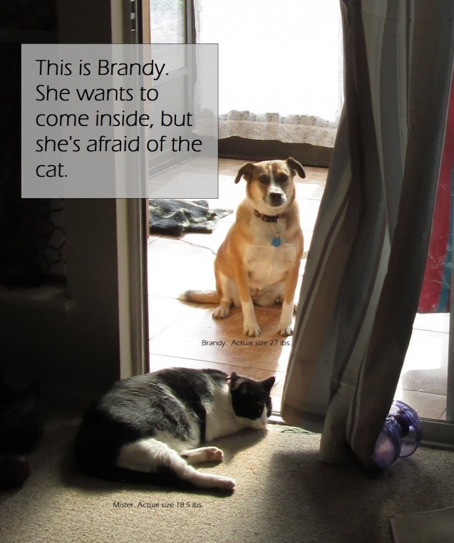brandy-n-mister