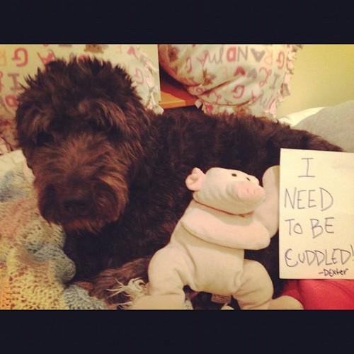 dog-shame3