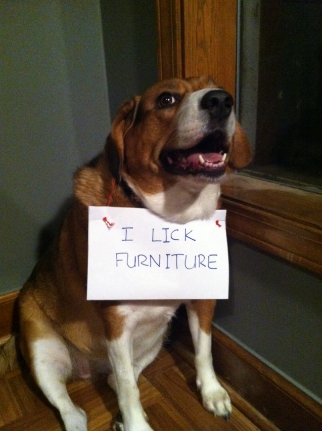 dog-shaming-eunice