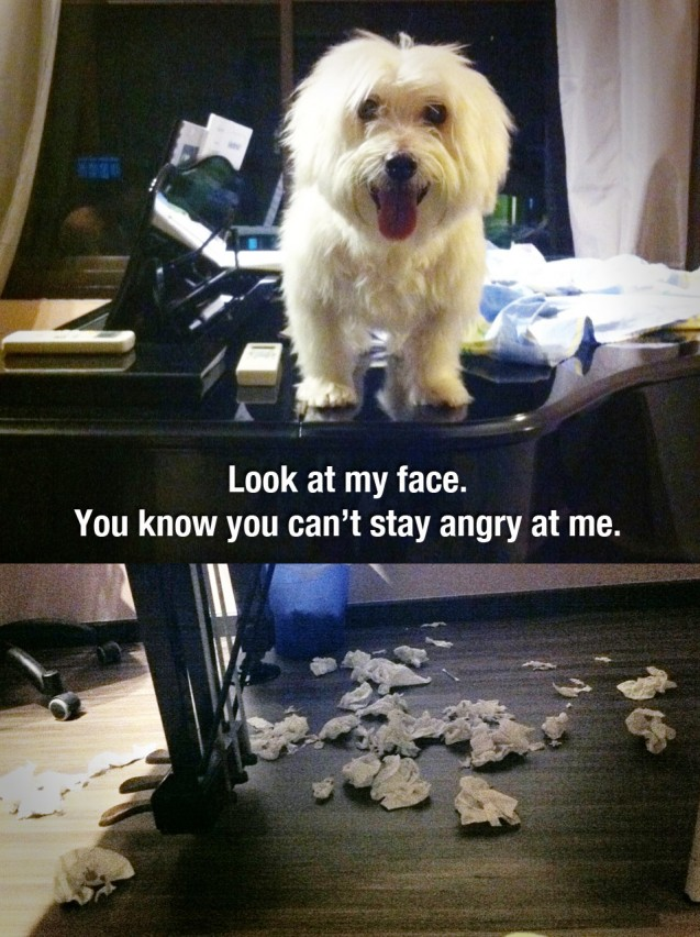 dog-shaming-piano