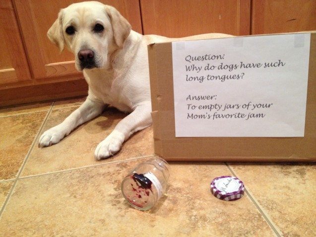dogshaming-651
