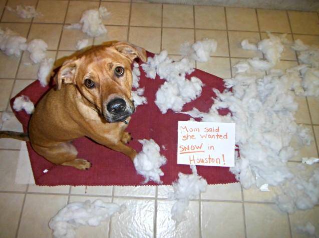 dogshammed