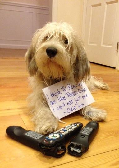 odie-remotes