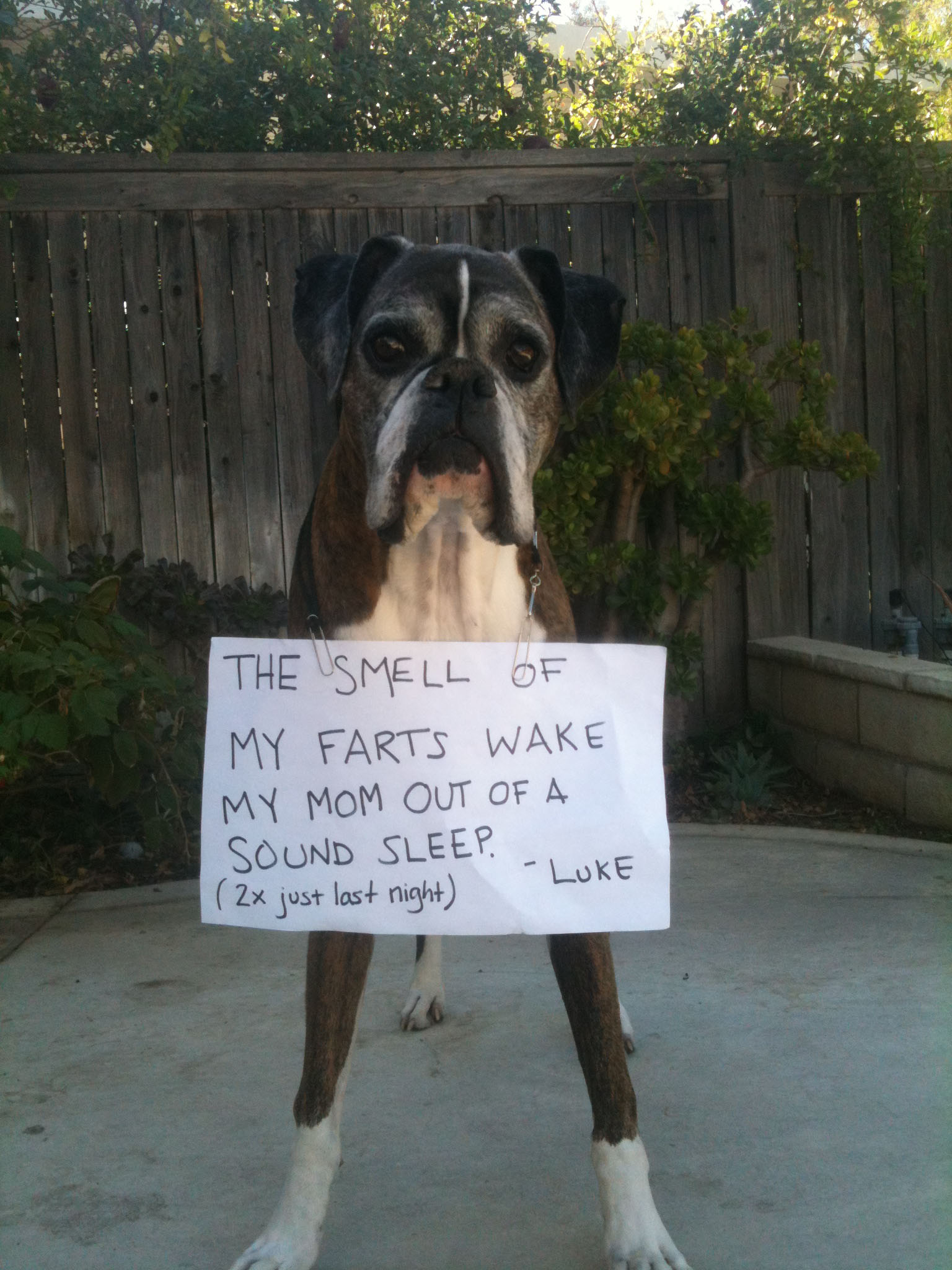 Dog Farting With New Food