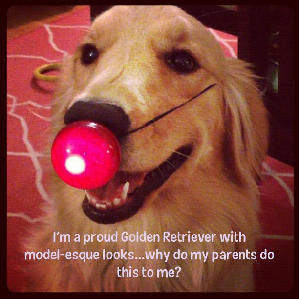 http://www.dogshaming.com/wp-content/uploads/2012/12/reindeer.jpg