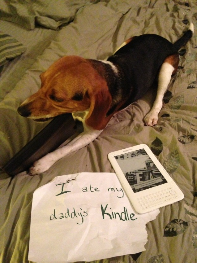 sammy-shaming