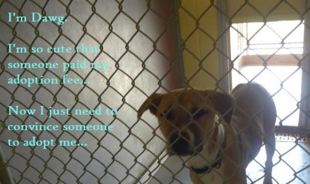 Dawgs-dog-shaming