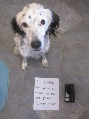 Dodger-mousetrap-shaming