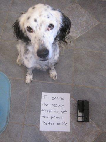 Dodger-mousetrap-shaming