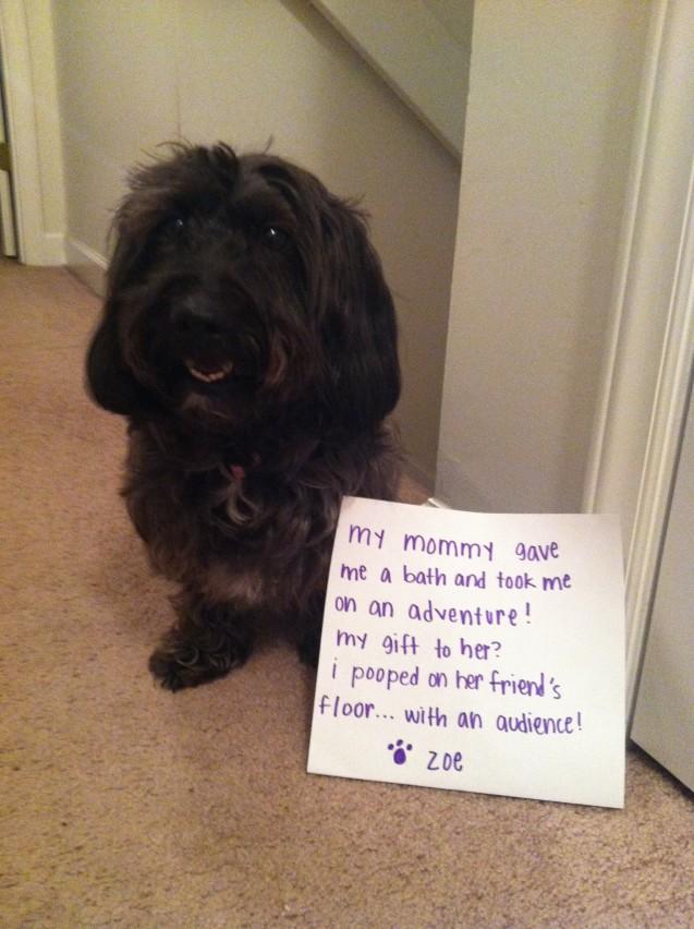Dog-Shaming-Zoe
