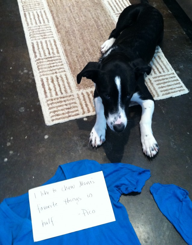 DogShaming_Pico