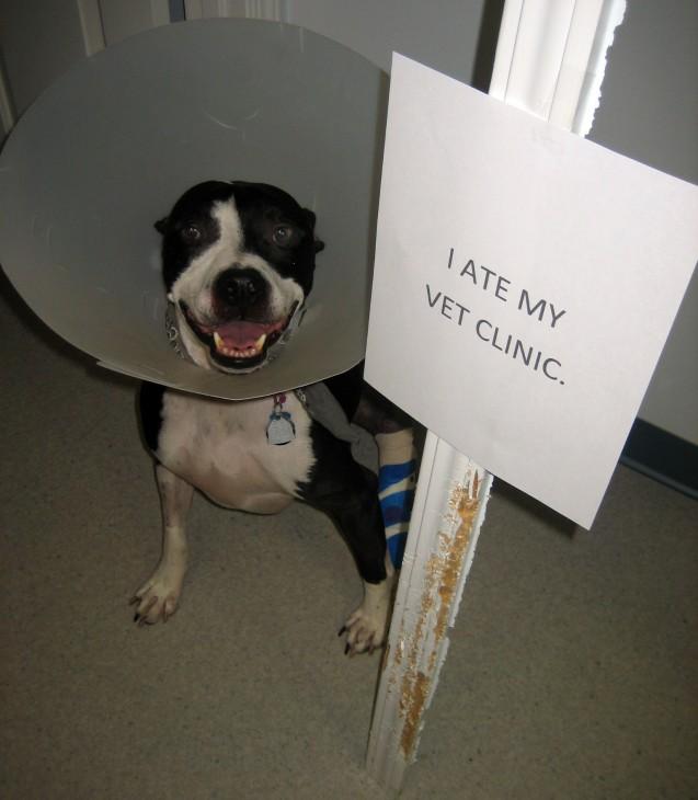 I-ate-my-vet-clinic