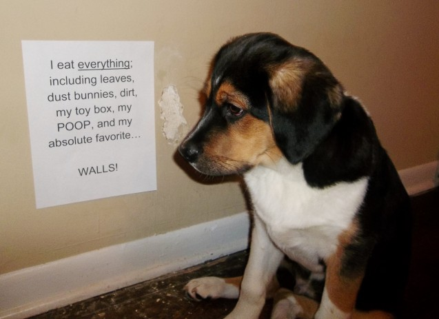 Linus-Dog-Shaming-3