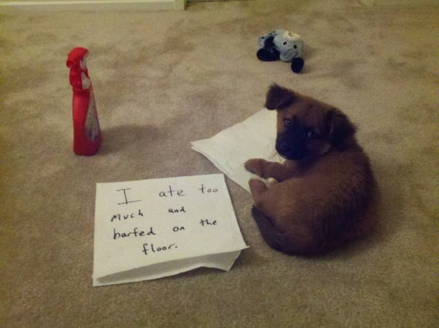 Max-Dogshaming