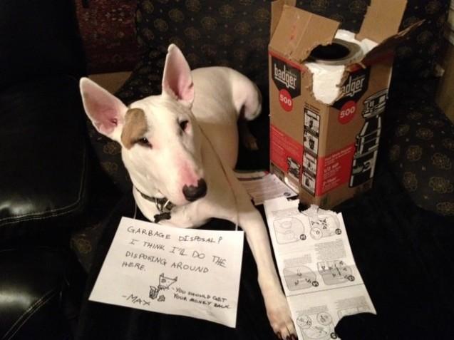 Max-dog-shaming