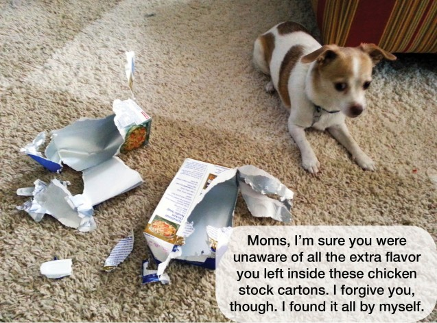 Scout-Dog-Shaming-w-text-1