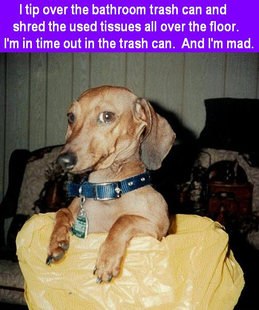 bobo-the-wonder-dog