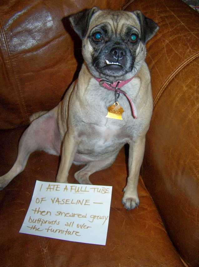 dog-shaming16