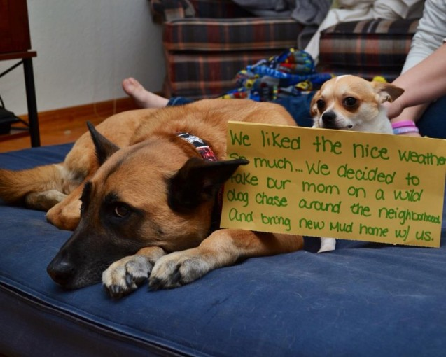dog-shaming18