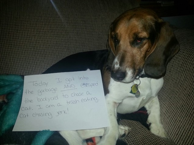 dogshaming22
