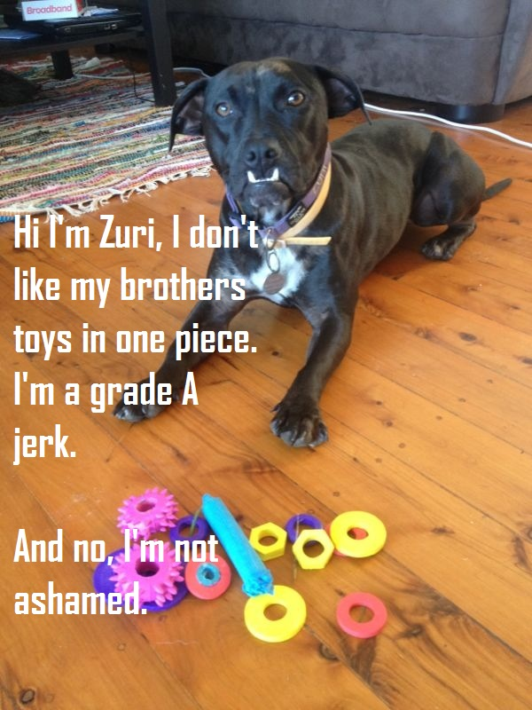 dogshaming25