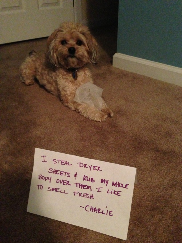 dogshaming6