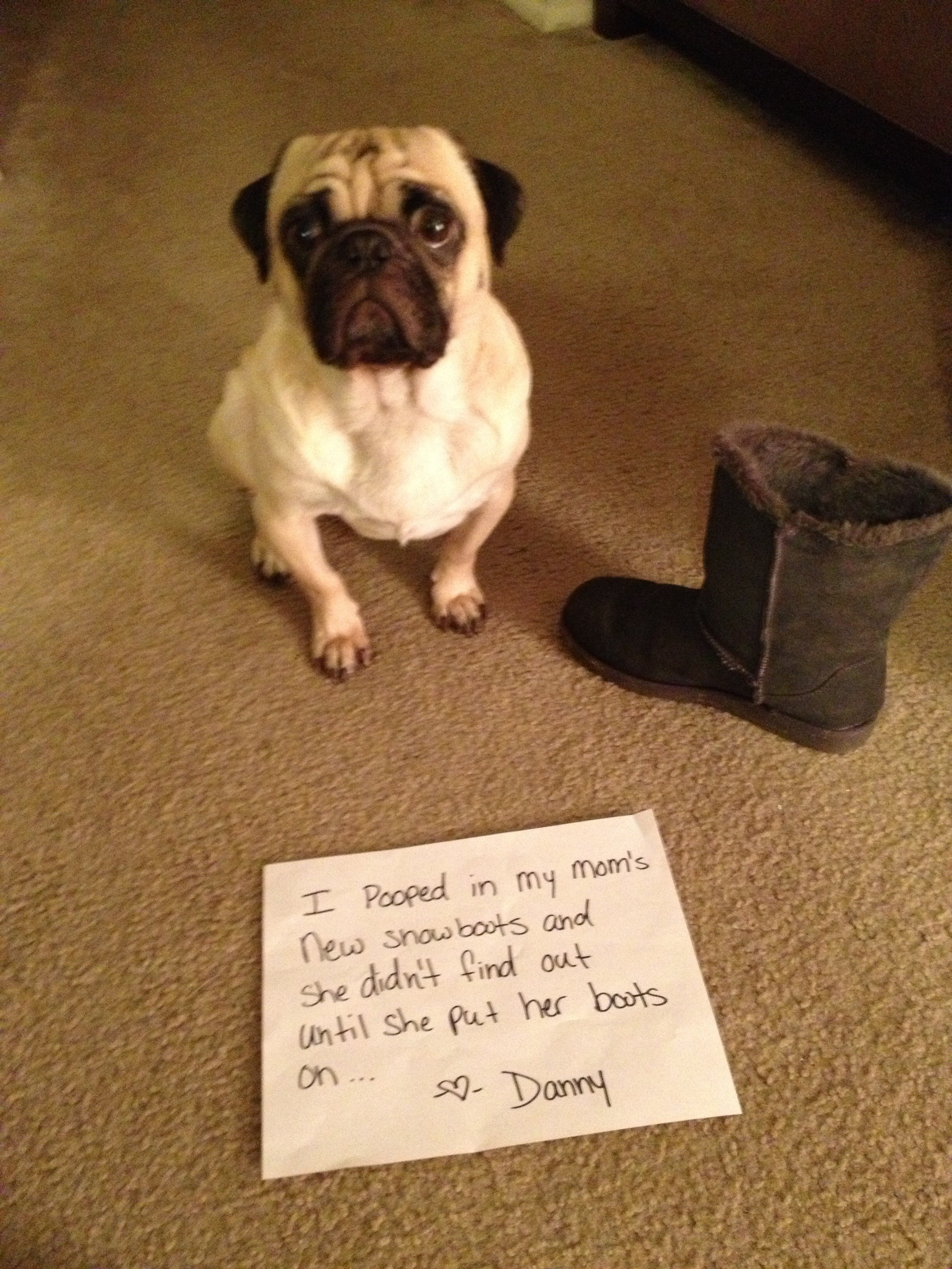 pug pooping pooped in your boots i have 9018