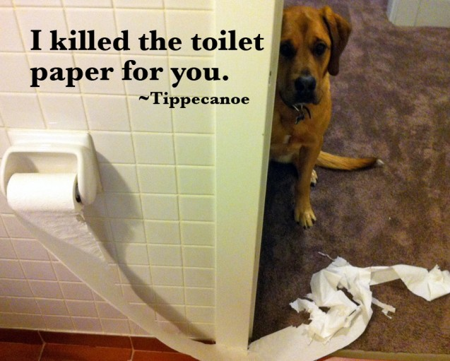 toiletpaper-copy1